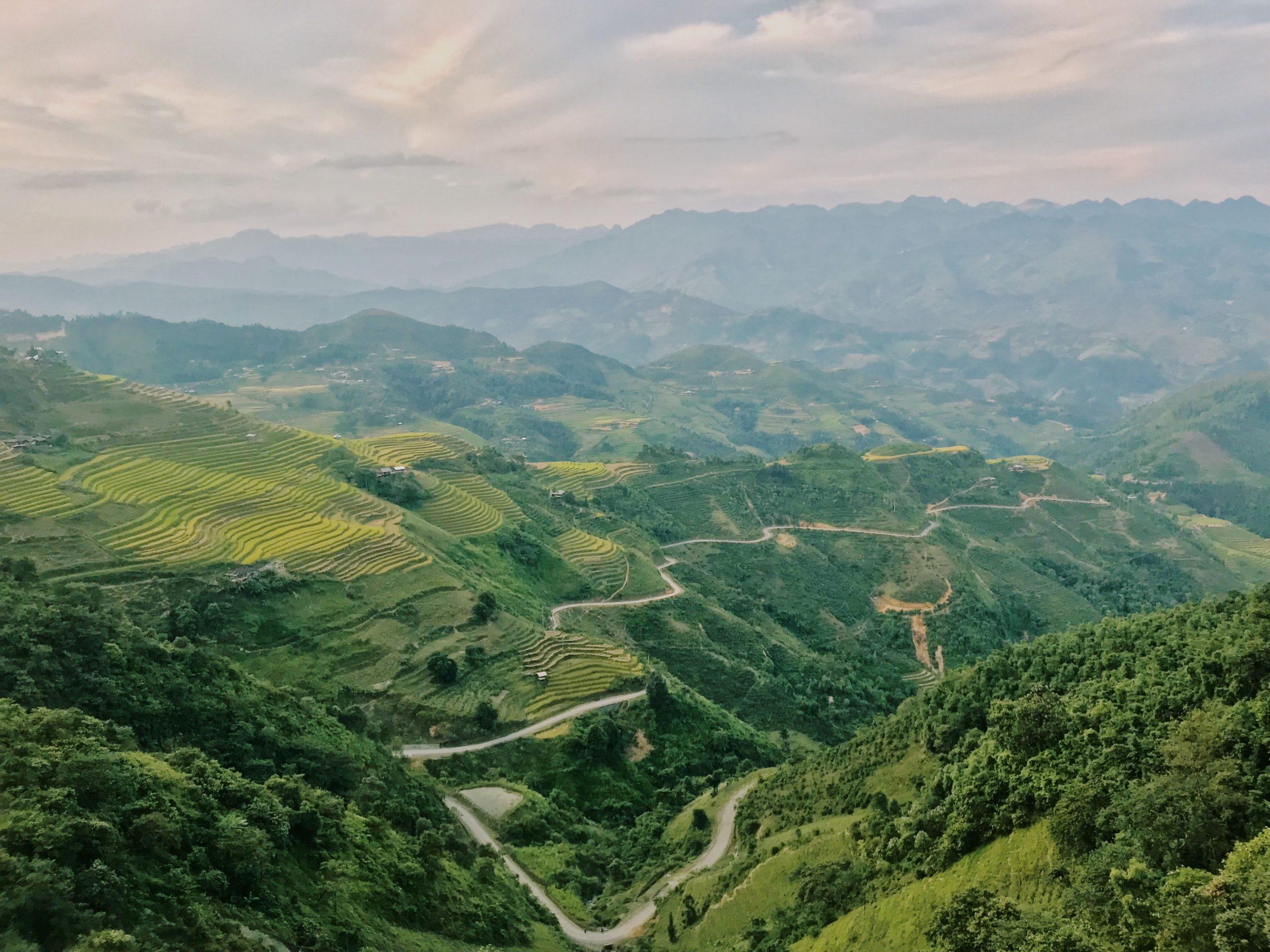 Khung cảnh đẹp nên thơ của vùng trà shan tuyết Hoàng Su Phì - Hà Giang